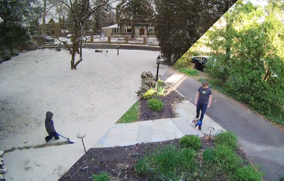 Nest cam images of the yard